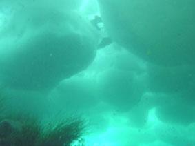 下から見る流氷